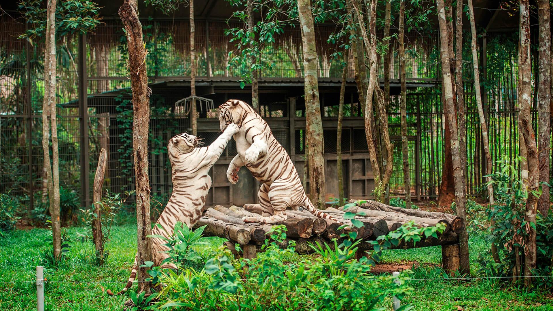 những trải nghiệm chỉ có ở hội an, nha trang, phú quốc - gallery9 - Những trải nghiệm chỉ có ở Hội An, Nha Trang, Phú Quốc