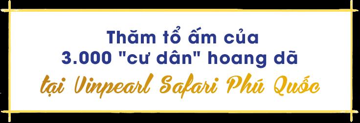 những trải nghiệm chỉ có ở hội an, nha trang, phú quốc - title3 - Những trải nghiệm chỉ có ở Hội An, Nha Trang, Phú Quốc